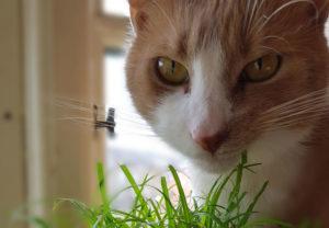 Sigge - glad for græs