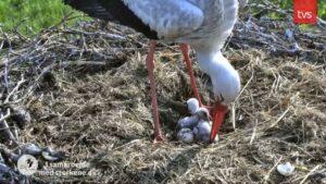 19.maj: 2 unger og et æg