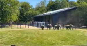 Elefanterne Ramboline, Lara, Djunga og Jenny