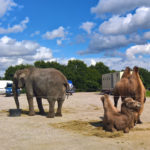 Synes ikke om at vilde dyr skal fremvises i cirkus, men de så fine ud her på Tangkrogen