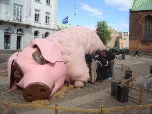 gris i eftermiddags