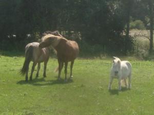 Heste i Gl. Harlev