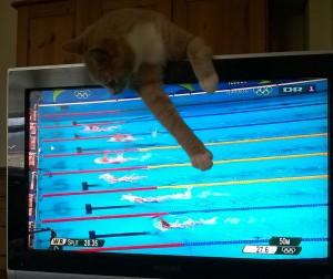 Ikke mere svømining tak!