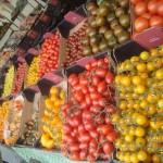 Mange tomater