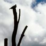 The Suitors - og en due